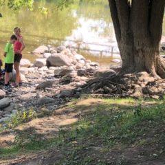 Kids, Mayor Weaver release 125 baby sturgeon, cousins of T-Rex, into Flint River