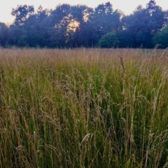 Village Life:  Remembering a Flint walk when far away–my secret of self-care