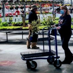 """Local nursery owner coping with restrictions tells gardeners: keep tilling the soil for that """"Covid-19 Victory Garden"""""""